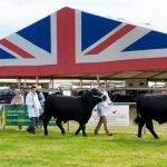 Edenbridge & Oxted Union Flag Gables Danco